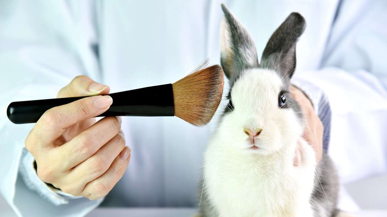 Persuasive Essay on Animal Testing: Possible Articles to Support Your Writing
